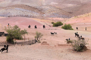 Rodeo de Burros (3)